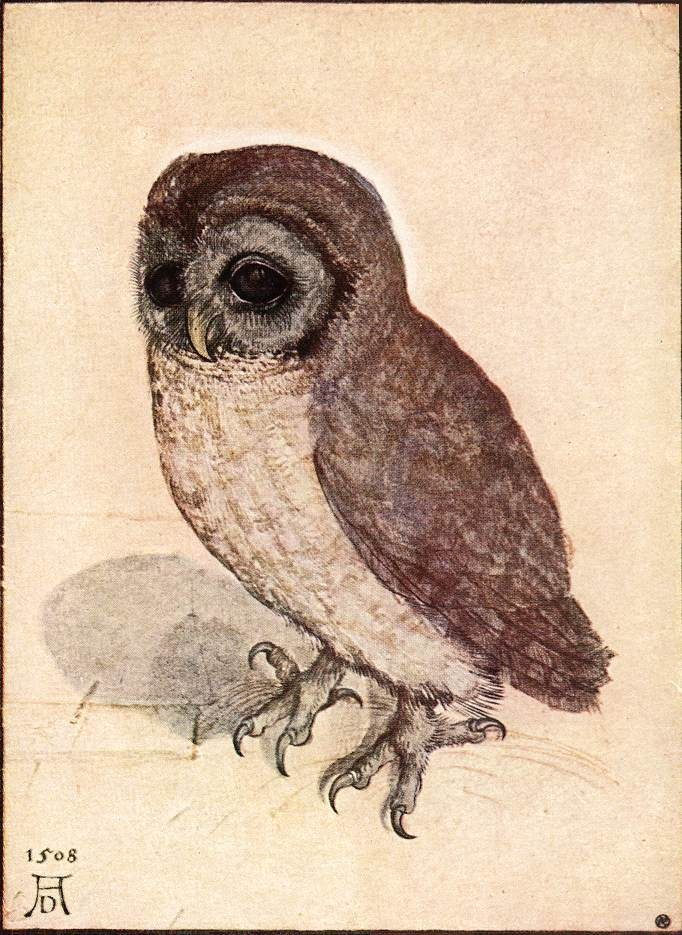Owl - Dream meaning and symbolism