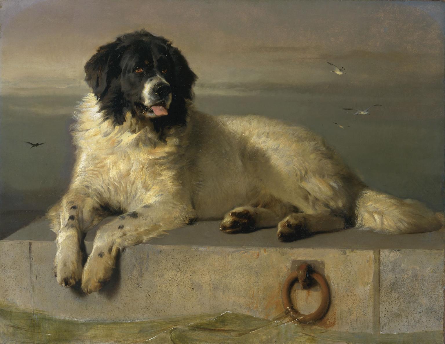 Sir Edwin Landseer - Novofundlandský pes
