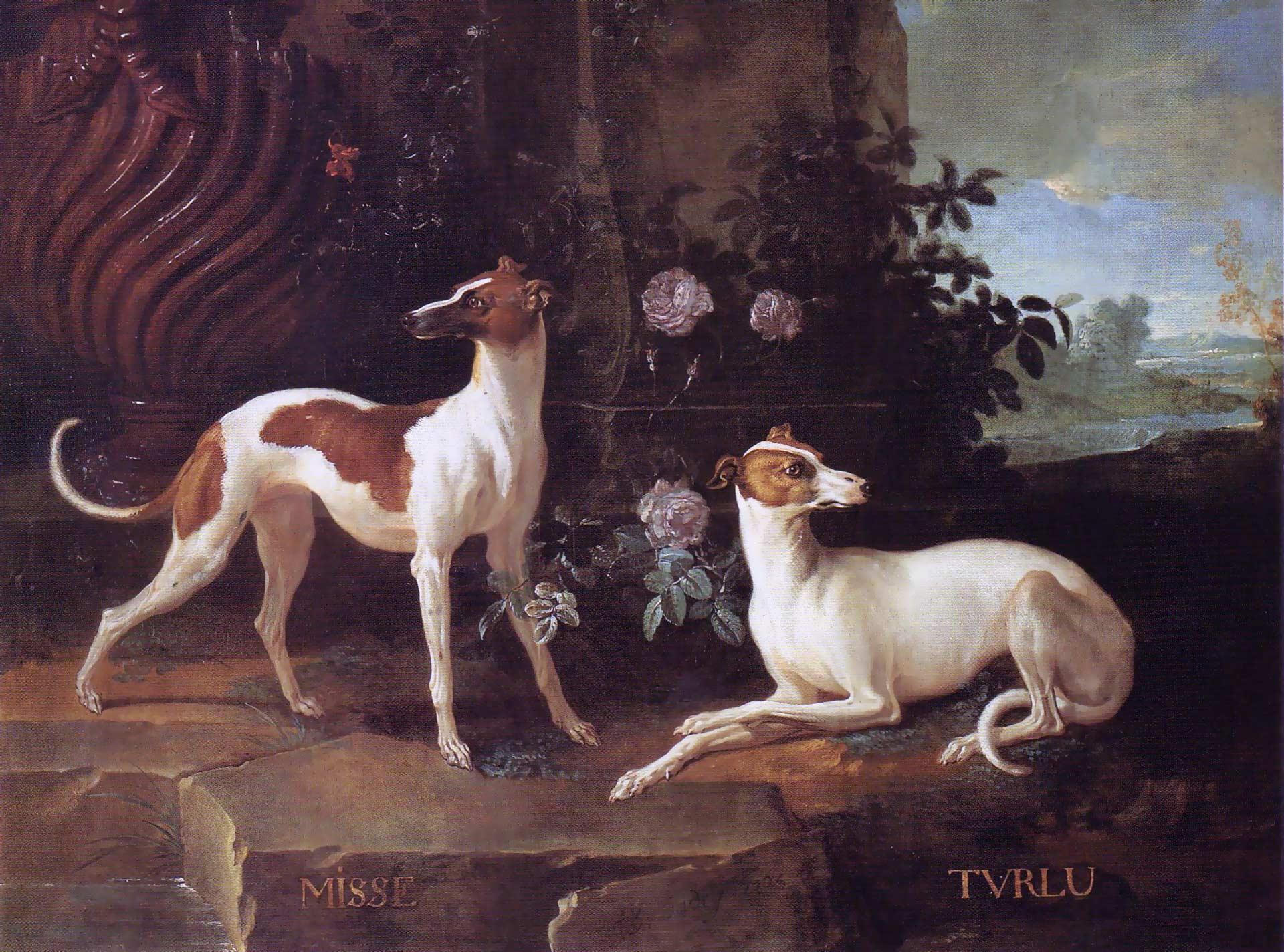 Jean-Baptiste Oudry - Misse a Turlu, dva chrti patřící Ludvíku XV.