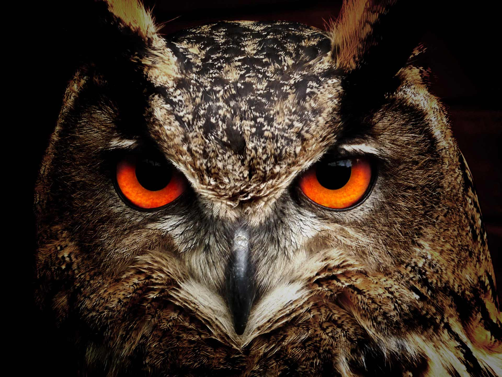 Owl Dream Meaning And Symbolism
